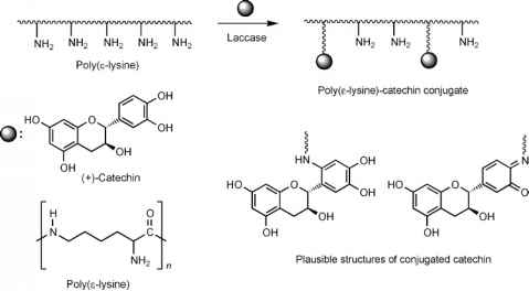 Catalase And Lead Inhibition