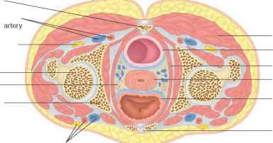 Round And Ovarian Ligaments