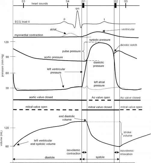 Cardiac cycle heart failure guws medical electrical and mechanical events of a single cardiac cycle of the left heart see text for details ecg electrocardiogram normal valve diagram ccuart Image collections