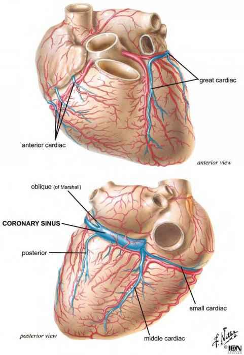 Nerve Supply Of Interventricular Septum - Heart Failure - GUWS Medical