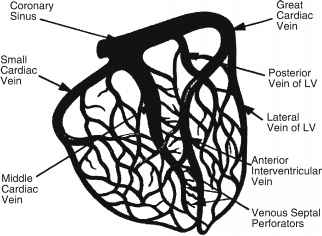 Heart Sinus Venous Anatomy
