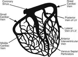 Coronary Arteries - Heart Failure - GUWS Medical