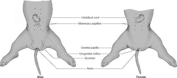 Internal Nares Anatomy
