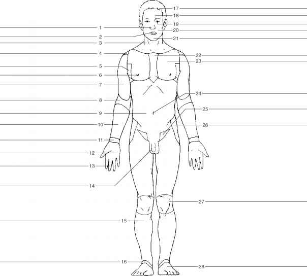 unlabeled body diagram online wiring diagram