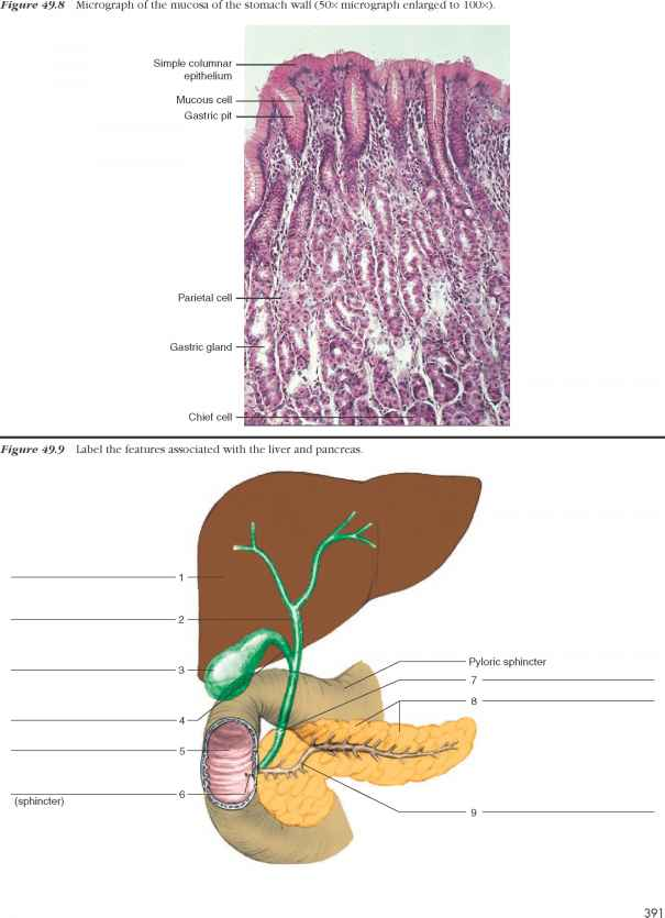 Procedure Esmall And Large Intestines - Human Anatomy - GUWS Medical
