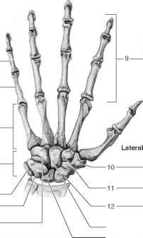 hand diagram to label rotator cuff diagram to label procedure bthe upper limb - human anatomy - guws medical
