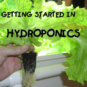 How To Setup A Hydroponic System