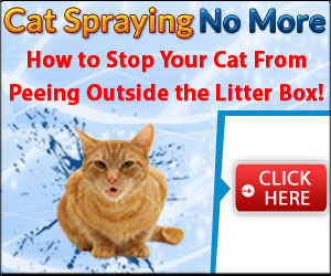 Getting a Cat to Stop Spraying Inside