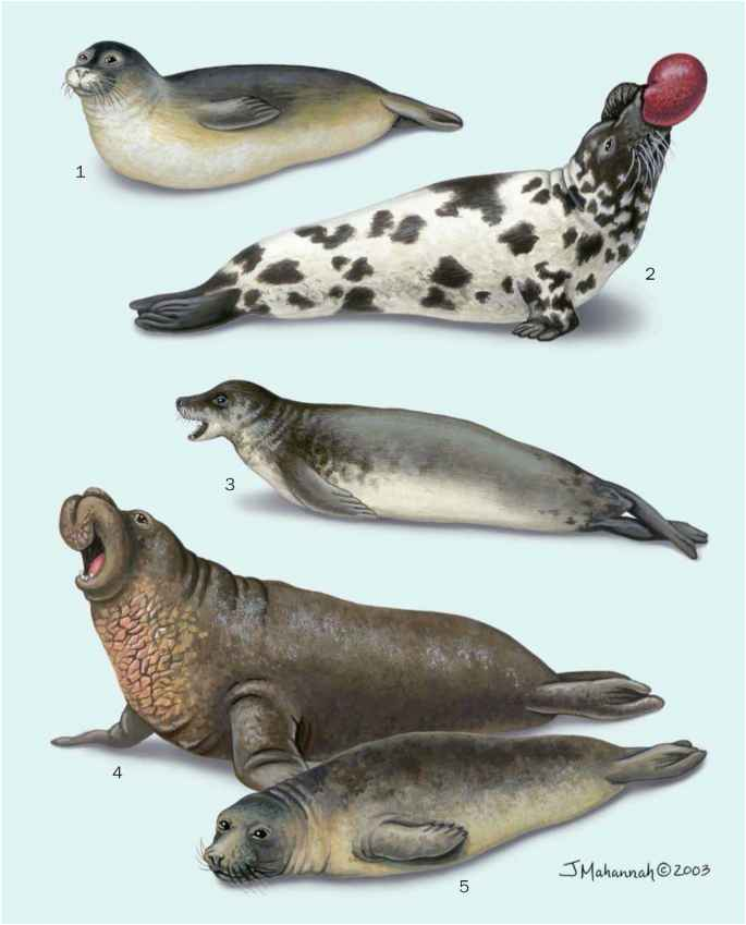 Types Seals Animals