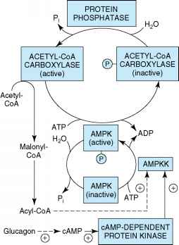 Adenylate Kinase Phosphorylase