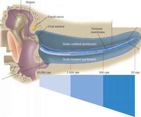 Equilibrium Pathway Ear