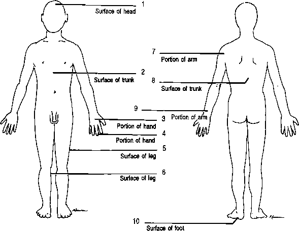 Anatomical Terms For Body Parts