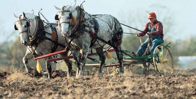 Image Farmer Plowing With Draft Horse