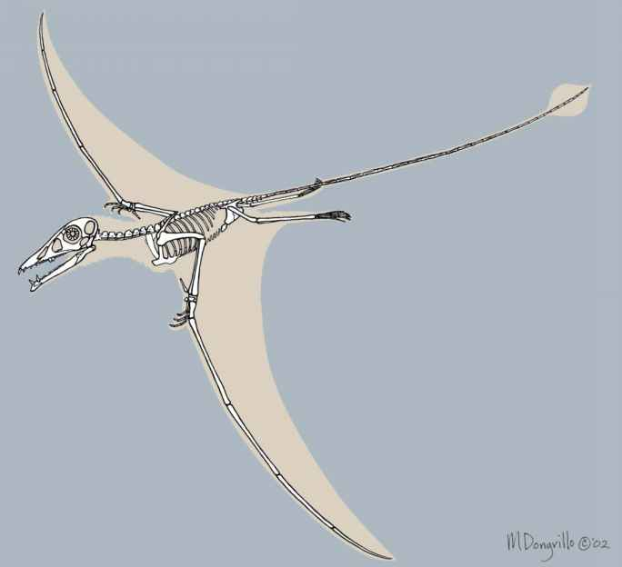 Eudimorphodon Had Fangs