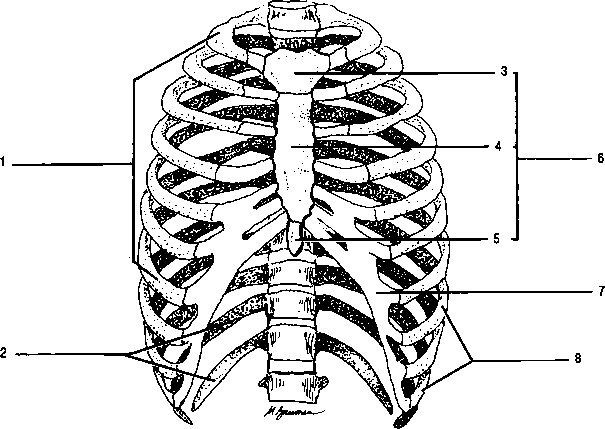 Spinal Column Bone Names