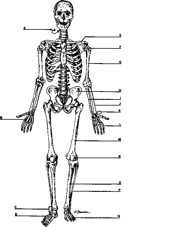 the lower extremities - power objective