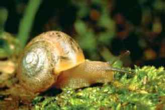 Land Snail New York