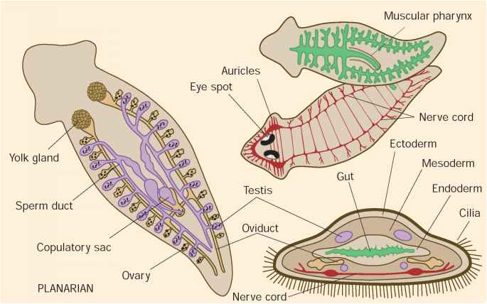 Evolution And Systematics Reproductive Biology Guws Medical