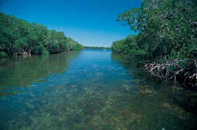 Mangroves Keys